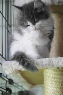 猫の写真・画像素材[547075]