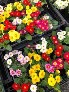 色とりどりの花のグループの写真・画像素材[1639292]