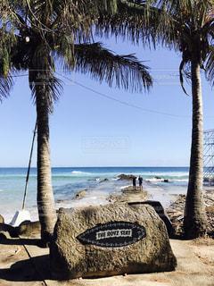 水の体の前でヤシの木とビーチ - No.728371