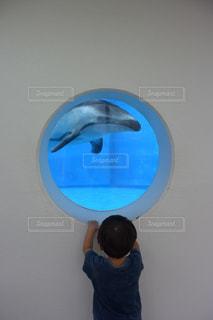 イルカと少年の写真・画像素材[831801]