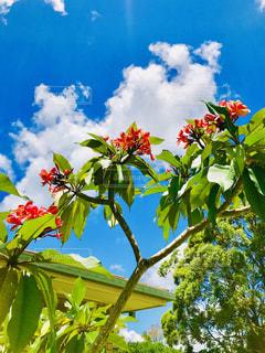 木の花の花瓶 - No.947833