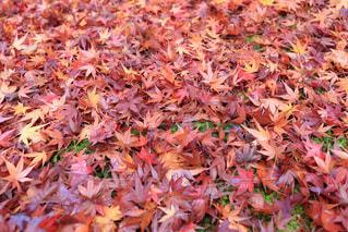 秋の写真・画像素材[286942]