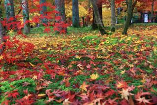 秋の写真・画像素材[286943]