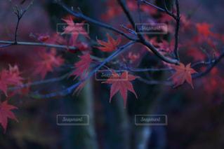 秋の写真・画像素材[286946]