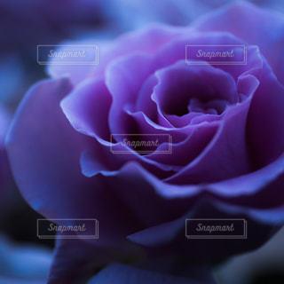 花の写真・画像素材[504109]