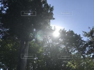 自然の写真・画像素材[2655970]