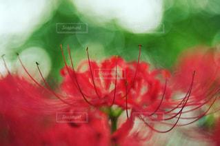 近くの花のアップ - No.931606