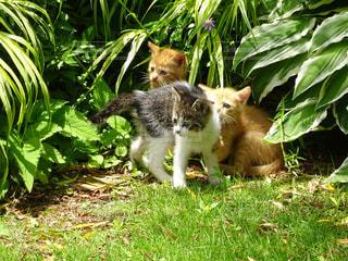 猫の写真・画像素材[287575]
