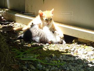 猫の写真・画像素材[287732]