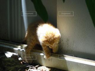 猫の写真・画像素材[287733]
