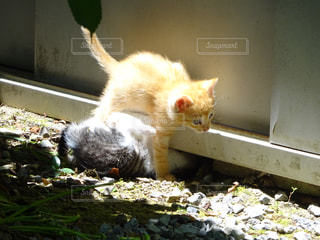猫の写真・画像素材[287736]