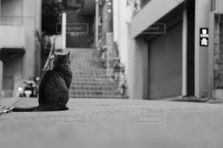 猫の写真・画像素材[528079]