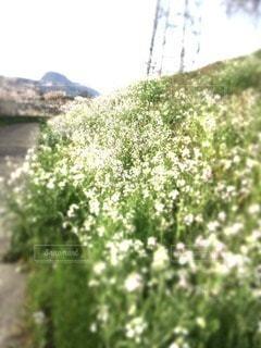 No.28074 お花畑