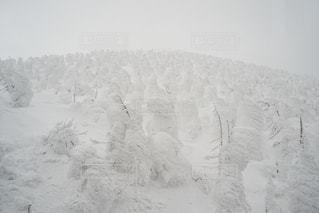 No.436662 冬