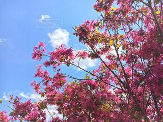 春の写真・画像素材[424113]
