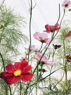 花の写真・画像素材[445942]