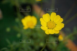 花の写真・画像素材[611694]