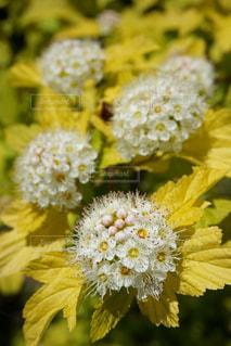 花の写真・画像素材[611698]
