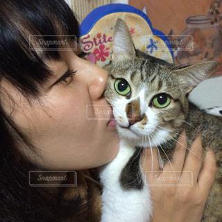 猫の写真・画像素材[288377]