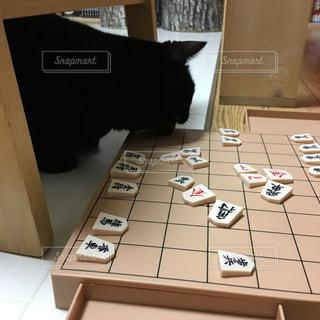 猫の写真・画像素材[333872]
