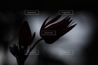 自然の写真・画像素材[291085]