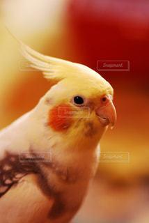 動物の写真・画像素材[298938]