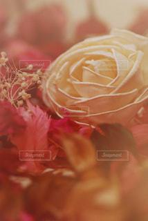 花の写真・画像素材[299757]