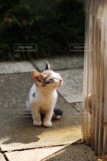 猫の写真・画像素材[299758]