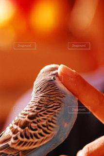 鳥 - No.299766
