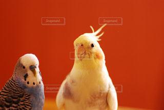 鳥の写真・画像素材[299774]