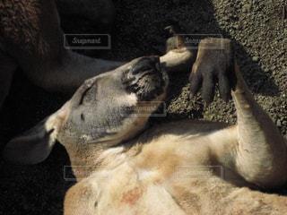 動物の写真・画像素材[312379]