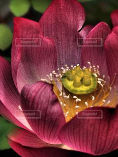 自然の写真・画像素材[312468]