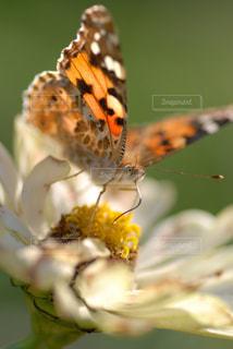 自然の写真・画像素材[333763]