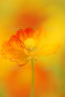 自然の写真・画像素材[340551]