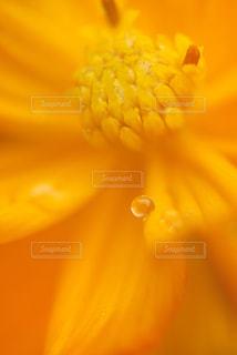 花の写真・画像素材[340552]