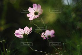 自然の写真・画像素材[340596]