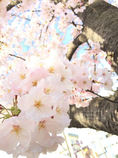 花の写真・画像素材[425199]