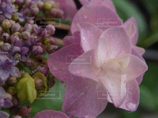 花の写真・画像素材[575775]