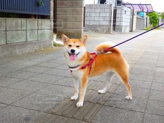 No.575784 犬