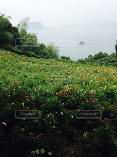 花の写真・画像素材[298984]