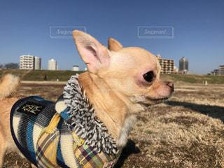 犬 - No.318883