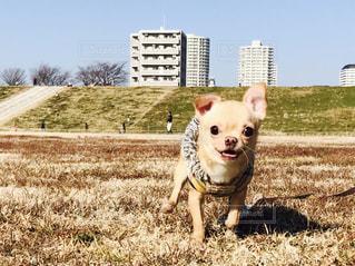 犬 - No.318884