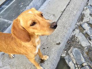 犬の写真・画像素材[306291]