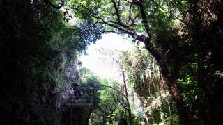 沖縄の森林を臨む…!の写真・画像素材[289623]