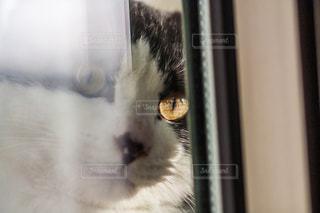 猫の写真・画像素材[302963]