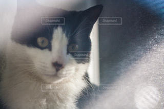 猫 - No.302966