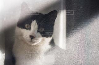 猫の写真・画像素材[302968]