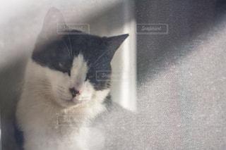 猫 - No.302969