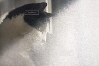 猫 - No.302971