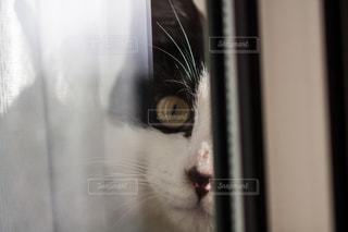 猫 - No.302973